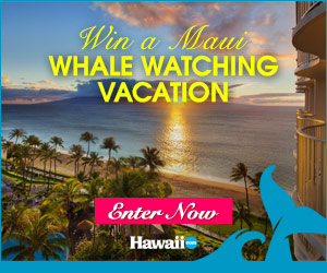 Enter to win a Maui Whale Watching Vacation