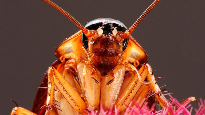 Xtremco Pest Control Professionals